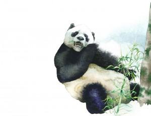 Gran Panda