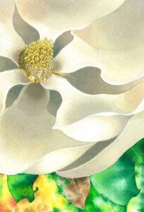 Sehnsucht Magnolia