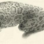 Jaguar composite ascension 3. 2016, Carboncillo, 47 x 13 cm